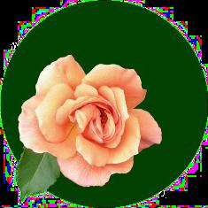 Logo der Gartenpartei